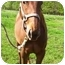 Photo 3 - Thoroughbred for adoption in Old Fort, North Carolina - Penelope