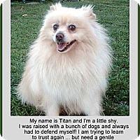 Adopt A Pet :: Titan - Irvine, CA