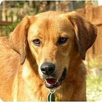 Adopt A Pet :: JOSIAH - Hagerstown, MD