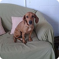 Adopt A Pet :: Sara- IN CT - West Hartford, CT