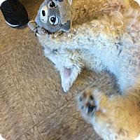 Adopt A Pet :: Abbot - Phoenix, AZ