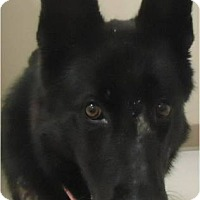 Adopt A Pet :: Black Beauty - Cleveland, OH