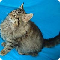 Adopt A Pet :: Rocky - Columbus, OH