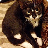 Adopt A Pet :: Viv - Brooklyn, NY