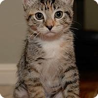 Adopt A Pet :: RileyS - North Highlands, CA