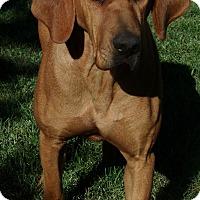 Adopt A Pet :: Reba - Buffalo, WY