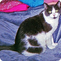 Adopt A Pet :: Missy - N. Billerica, MA