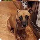 Adopt A Pet :: Maid Marion