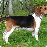 Adopt A Pet :: Rexy - Canterbury, CT