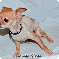 Adopt A Pet :: Lucy Lu - Oakland Park, FL