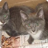 Adopt A Pet :: Monet&Miro'12 - New York, NY