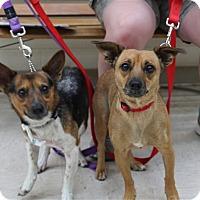 Adopt A Pet :: Peanut & Scuba Girl - Elyria, OH