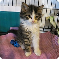 Adopt A Pet :: Ronald - Geneseo, IL
