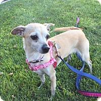 Adopt A Pet :: Sunset - Las Vegas, NV
