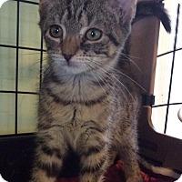 Adopt A Pet :: Bambi - Breinigsville, PA