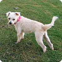 Terrier (Unknown Type, Medium) Mix Dog for adoption in Alpharetta, Georgia - Jolina