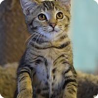 Adopt A Pet :: Meredith - DFW Metroplex, TX