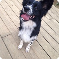 Adopt A Pet :: Cooper - Centerburg, OH