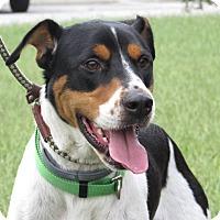 Adopt A Pet :: Roscoe - Windsor, VA
