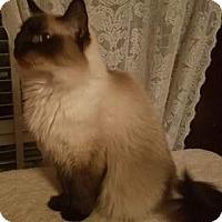 Adopt A Pet :: Genevieve - Ennis, TX