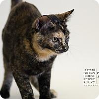 Adopt A Pet :: BEATRICE - Houston, TX