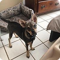 Adopt A Pet :: Prince - Davie, FL