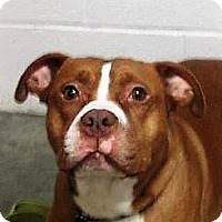 Adopt A Pet :: Brutus - LaGrange, KY