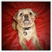 Adopt A Pet :: BUDDY - Medford, WI