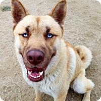 Adopt A Pet :: Adonis - Romoland, CA