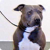 Adopt A Pet :: Bruce - Wildomar, CA