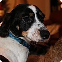 Adopt A Pet :: Lucky - Vidor, TX