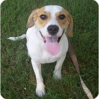 Adopt A Pet :: Daisy (pending adoption) - Adamsville, TN