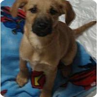 Adopt A Pet :: Velma - scooby litter - Phoenix, AZ