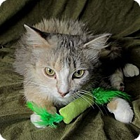 Adopt A Pet :: Ricki - New Egypt, NJ