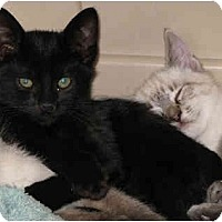 Adopt A Pet :: Bob - Davis, CA