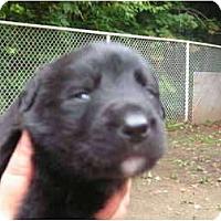 Adopt A Pet :: Jett - Rigaud, QC
