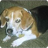 Adopt A Pet :: Lilybug - Phoenix, AZ