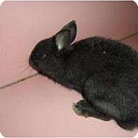 Adopt A Pet :: McKail - Maple Shade, NJ
