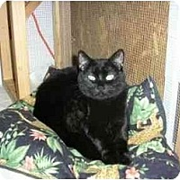 Adopt A Pet :: Ebony - New Port Richey, FL