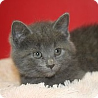 Adopt A Pet :: DILILAH - SILVER SPRING, MD