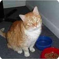 Adopt A Pet :: Marmalaide - Hamburg, NY