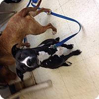 Adopt A Pet :: Carmen - East McKeesport, PA