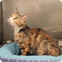 Adopt A Pet :: Cher - Athens, GA