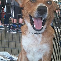 Adopt A Pet :: Nick - Fresno, CA