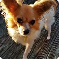 Adopt A Pet :: Rayne - Decatur, GA