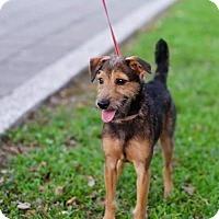 Adopt A Pet :: Pan Pan - Vancouver, BC