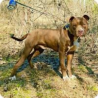 Adopt A Pet :: Rex - Walton County, GA