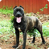 Adopt A Pet :: Artimus - Lawrenceville, GA