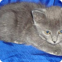 Adopt A Pet :: Phoebe - Evansville, IN