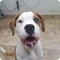 Adopt A Pet :: Lady - Chico, CA